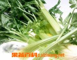 果蔬百科续根蔬菜
