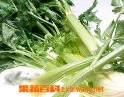 什么是续根蔬菜,吃续根蔬菜好处有哪些